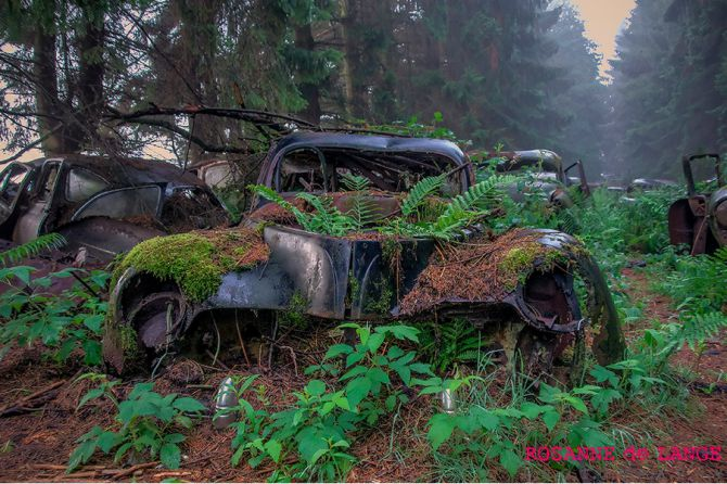 Картинки по запросу abandoned cars in forest